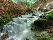 There are about 1,000 water springs in the Kellerwald-Edersee National Park