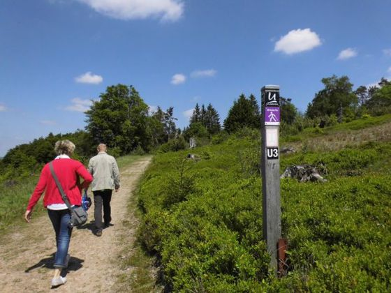 Hiking in the heathlands near Willingen