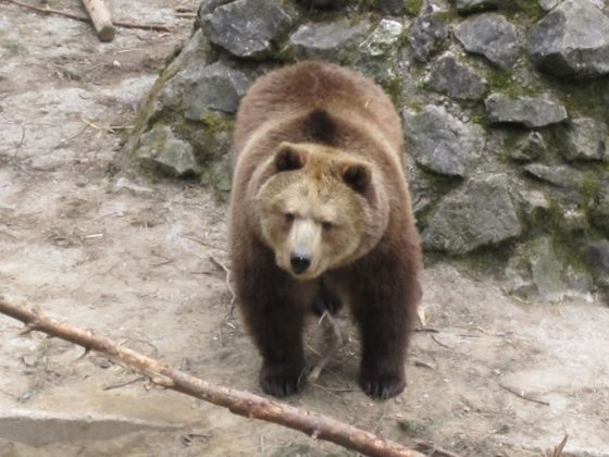 Brown bears also make their home at the Wildlife and Leisure Park Willingen